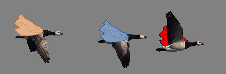 migrationstrategies_geese